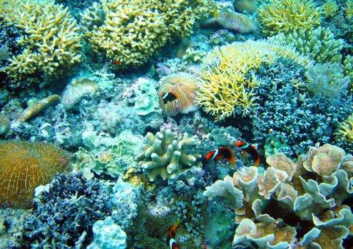 Индонезия, о Ломбок