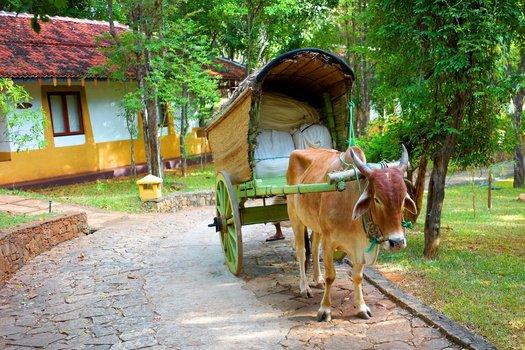 Шри-Ланка, Кандалама